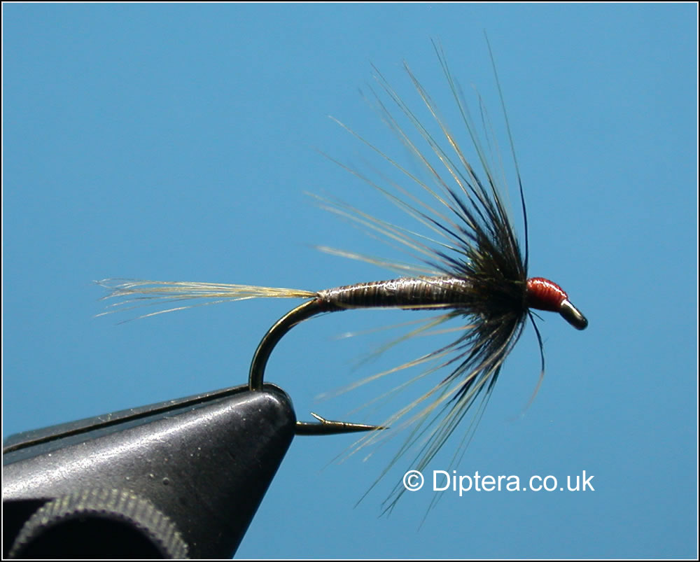 The Quilled Cruncher Fly Image
